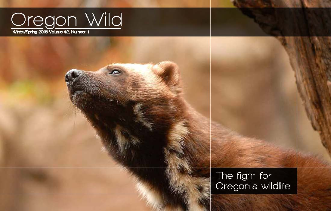 Oregon Wild Newsletter Spring Summer 2014 Cover