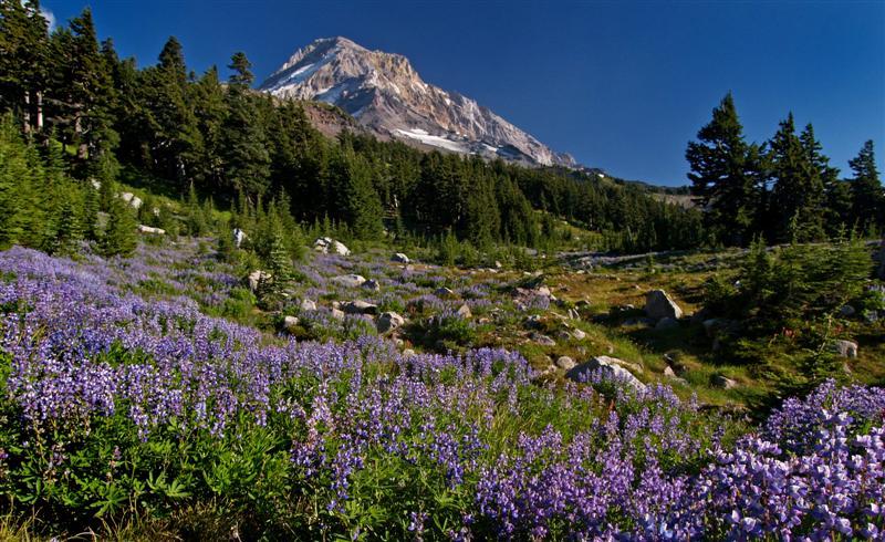 Vista Ridge (photo by Tom Kloster)
