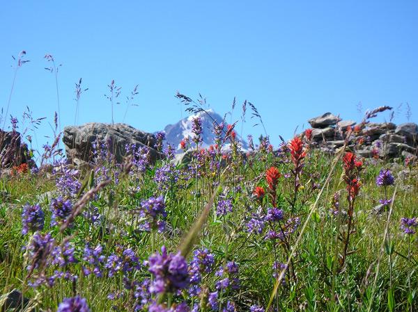 Boulder Lake Wildflowers (Erik Fernandez)