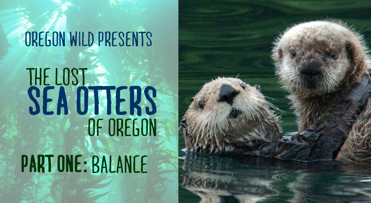 The Lost Sea Otters of Oregon: Part One