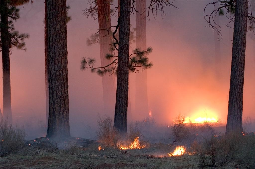 Controlled burning in the Deschutes NF.  Photo by Brett Cole