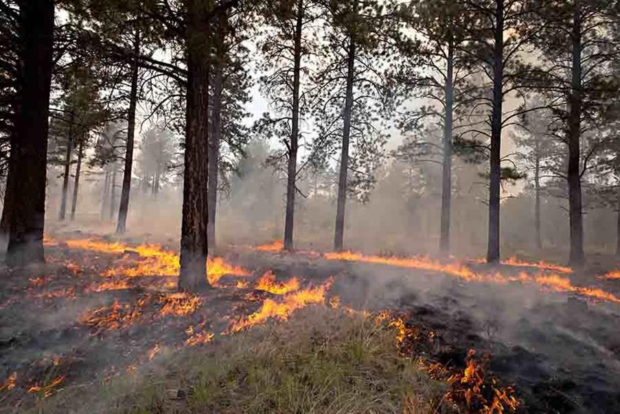 Low severity fire.