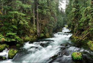 McKenzie River (photo by Tim Giraudier).