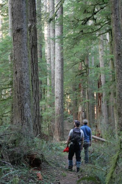 Hikers gaze up at towering trees in the Drift Creek Wilderness