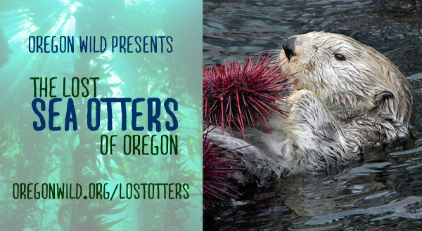 Lost Otters