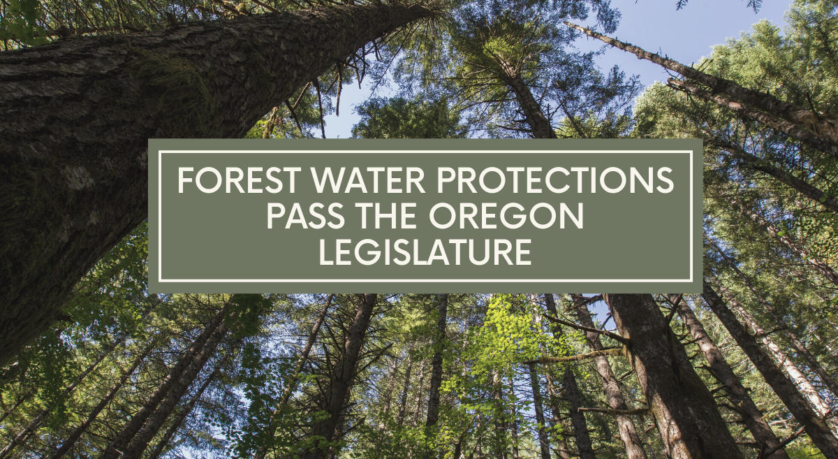 Forest Waters Protections Pass the Oregon Legislature