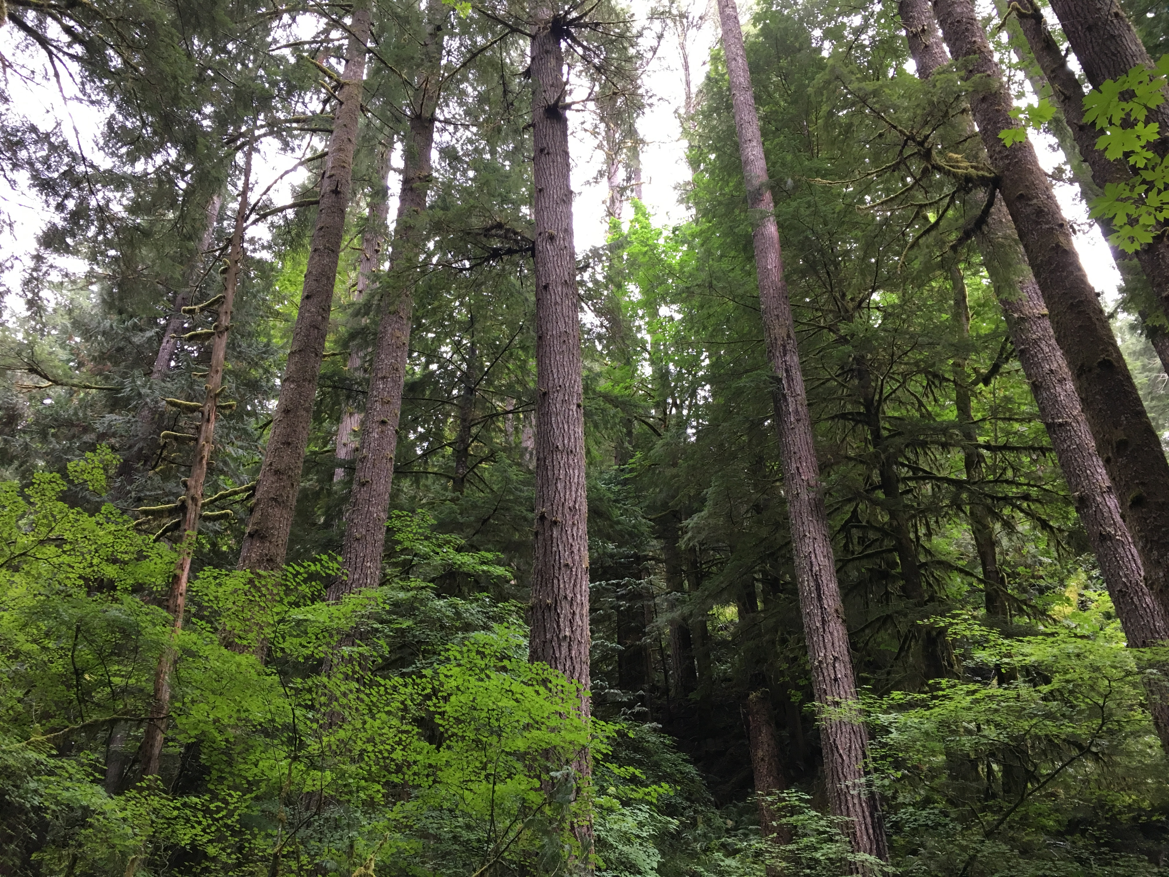 Forests near the Coquille River
