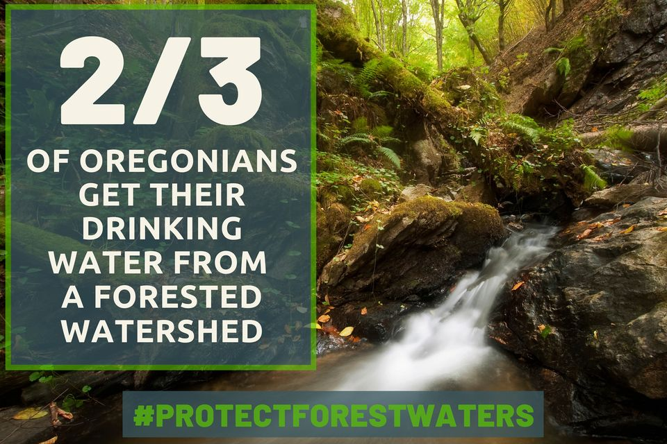 Defending Forest Waters for Coastal Communities