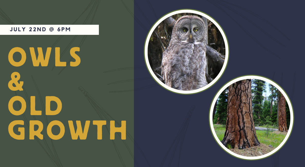Webcast: Owls and Old Growth of Eastern Oregon