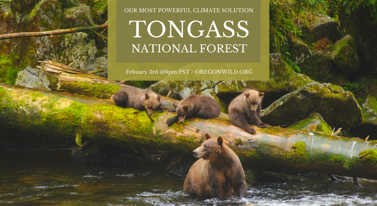 Tongass National Forest: Our Most Powerful Natural Climate Solution Feb 3rd at 6 PM - mama grizzly bear and 3 cubs in a river by a large downed tree