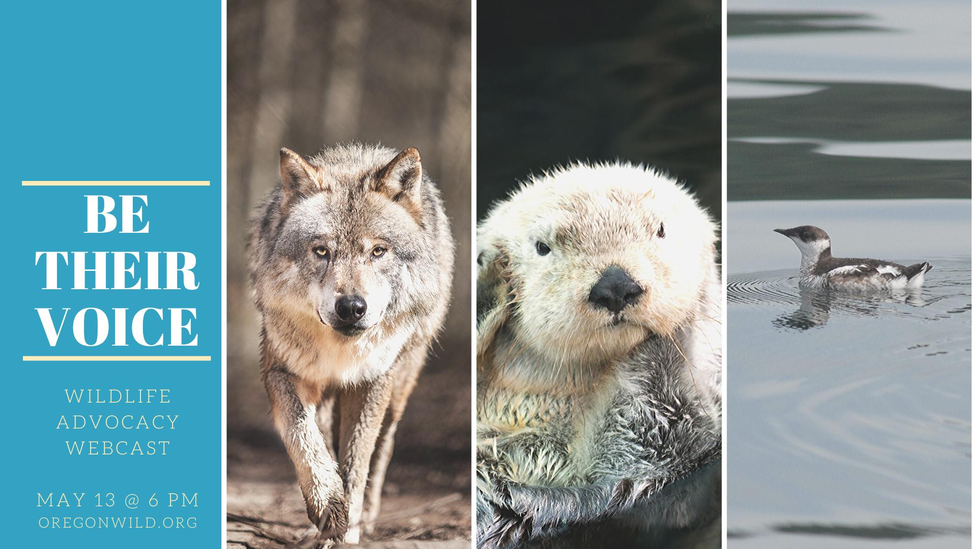 Speak for Wildlife