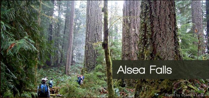 Alsea Oregon Map.Alsea River And Fall Creek Oregon Wild