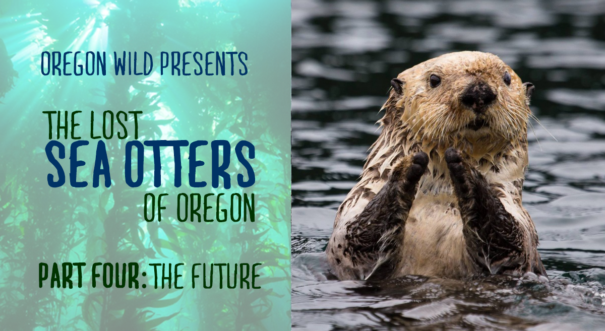 The Lost Sea Otters of Oregon: Part Four