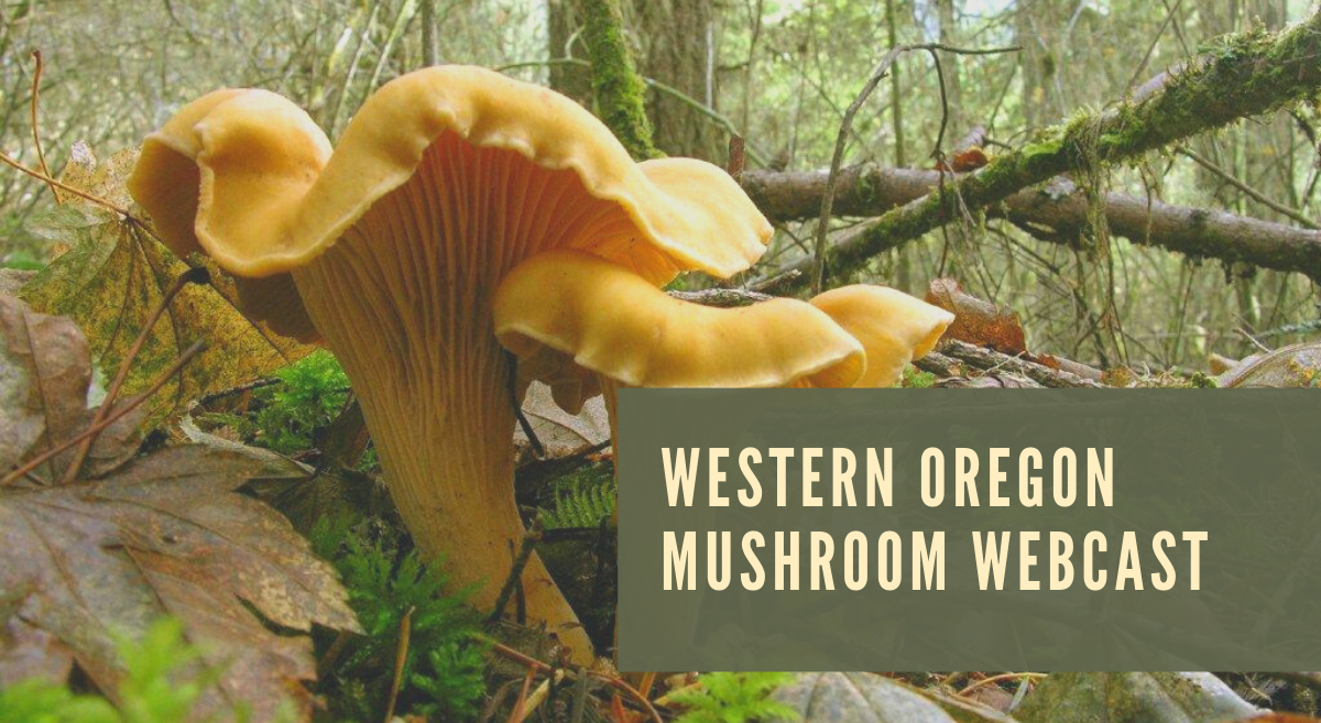 Webcast: Western Oregon Mushrooms