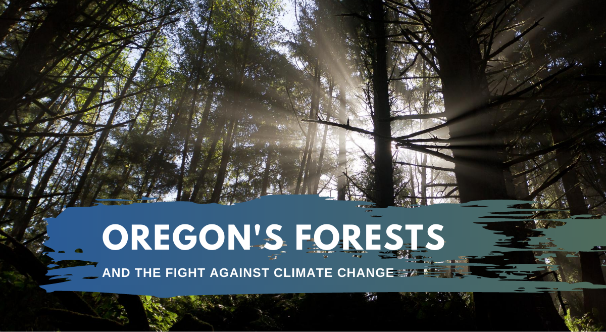 Webcast: Oregon's Forests and the Fight Against Climate Change