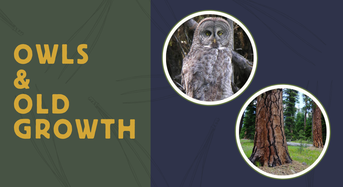 Owls and Old Growth of Eastern Oregon