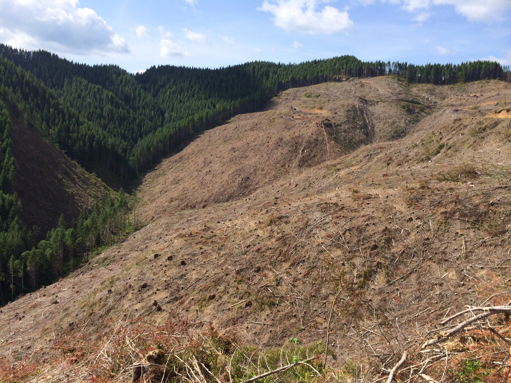 Clearcut on private lands