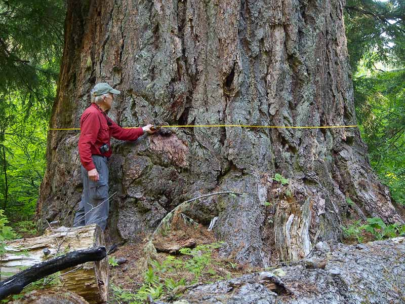 Old Growth Forest Oregon Map Hidden and Forgotten Oregon Old Growth Treasures | Oregon Wild