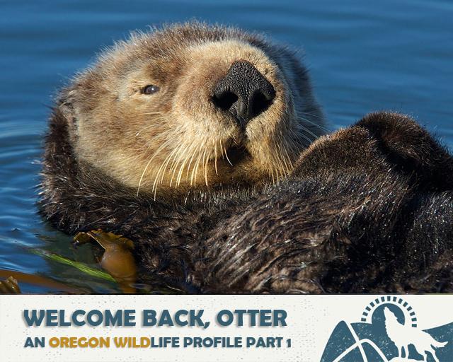 Welcome Back, Otter | Oregon Wild