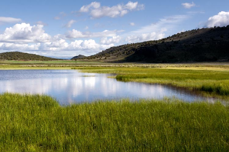 A Vision For The Klamath Basin Oregon Wild