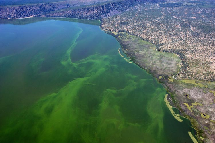 Algae in Upper Klamath Lake