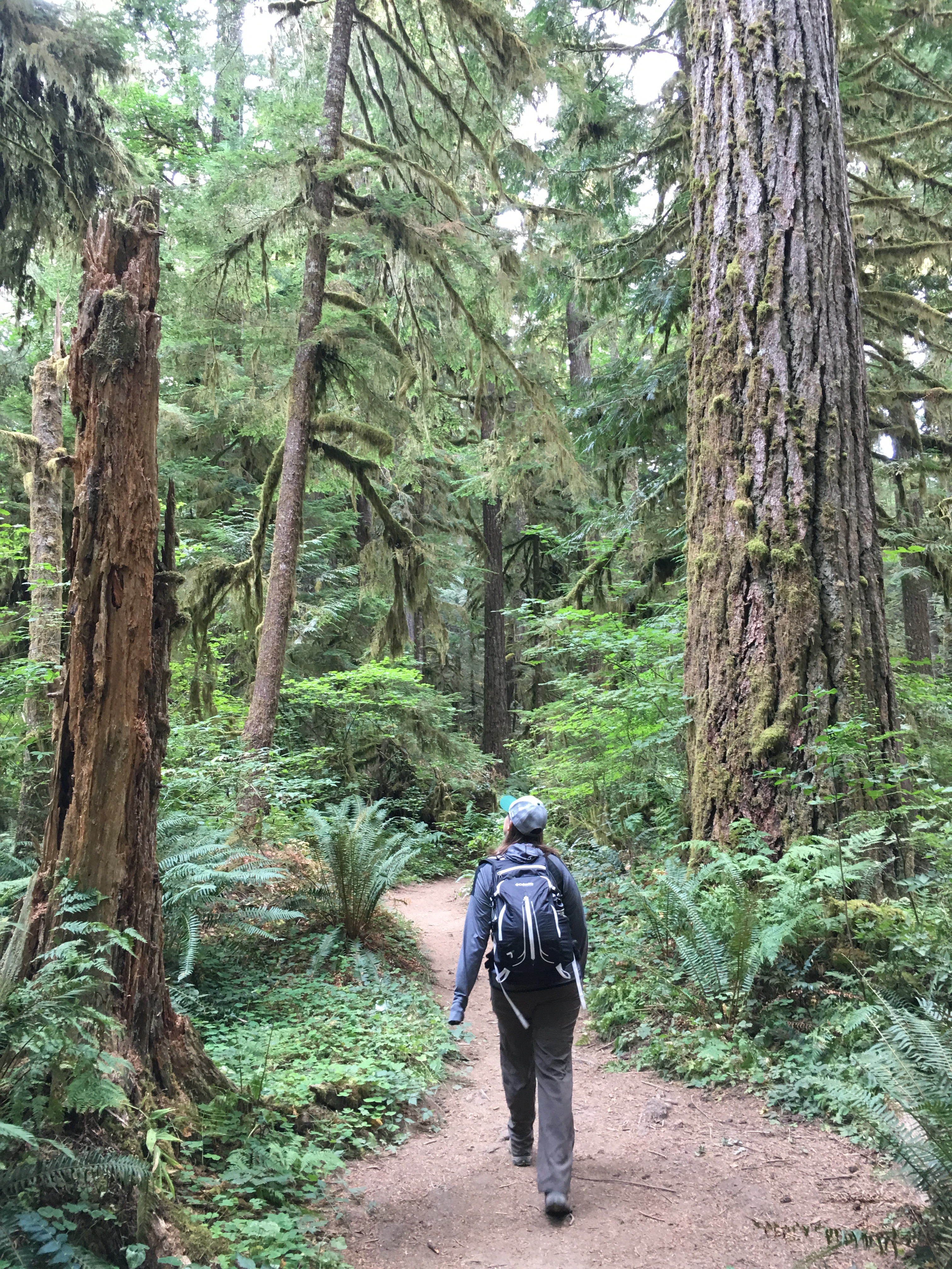 REI PDX: Exploring Oregon's Ancient Forests