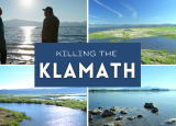 A collage of four images of the Klamath River are displayed. One image has two figures silhouetted and a different picture displays the river with a dead fish. A text box centered between all the images reads the title, which is Killing the Klamath.