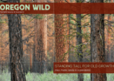 Oregon Wild Fall 2020 Newsletter Cover - A Ponderosa Pine Forest