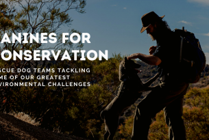 Webcast: Canines for Conservation: Webcast with the Rogue Detection Teams