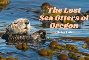 Webcast: The Lost Sea Otters of Oregon