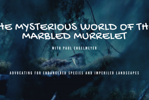 Webcast: The Mysterious World of the Marbled Murrelet