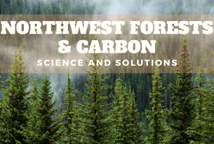 nw forests and carbon title over a green forest