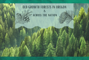 Webcast: Old-growth forests in Oregon and across the nation