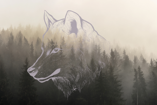 A sketch of a wolf over misty trees