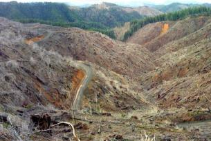 Oregon: Home of the Clearcut