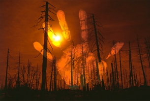 The Truth About Forest Fires