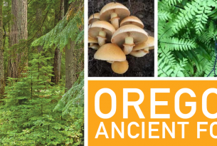 Hopes and fears for Oregon's Ancient Forests