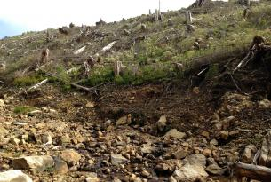Watseco Creek flows through a clearcut above Rockaway Beach Oregon.