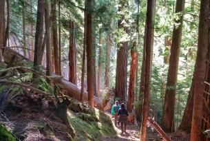 ancient forest hike, oregon