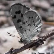 Leona's Little Blue Butterfly